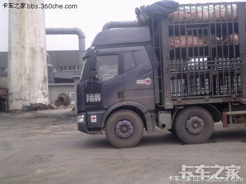 东风拉货车拉猪图片