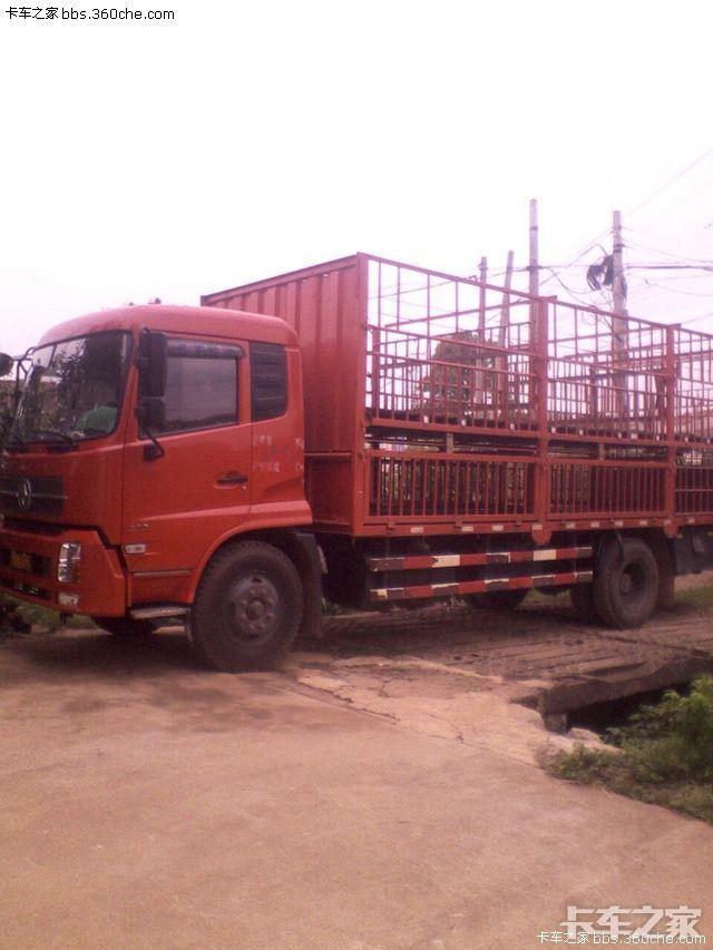 农村货车来拉猪