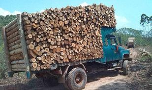 农用车的天下!广西钦州福达钦机拉木头