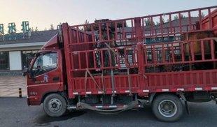 4米2营运度年度总结卡车之家论坛